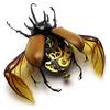 Steambug.jpg